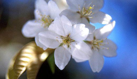 春の土用の過ごし方「自分」を出して良い!